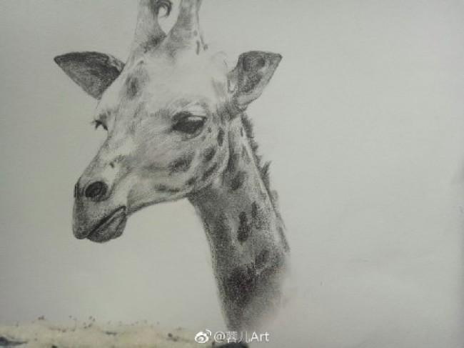 长颈鹿素描画手绘教程图片 长颈鹿素描头像画法 长颈鹿素描怎么画_www.youyix.com