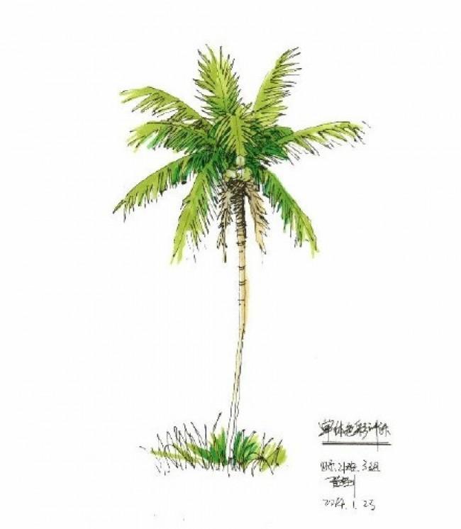一组植物马克笔表现素材图片 好看的植物盆栽的马克笔上色参考图片_www.youyix.com