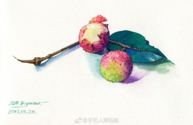 荔枝水彩画图片 荔枝水彩怎么画 有实物照片对比 真实逼真画法_www.youyix.com