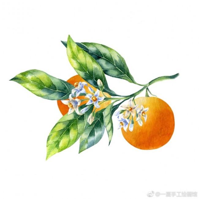 桃子水彩画画法 桃子水彩怎么画 桃子水彩手绘教程图片_www.youyix.com