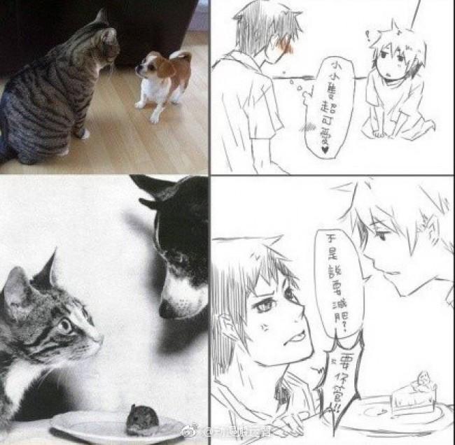 将狗狗和猫咪变成帅哥在一起会发生什么?创意插画图片_www.youyix.com
