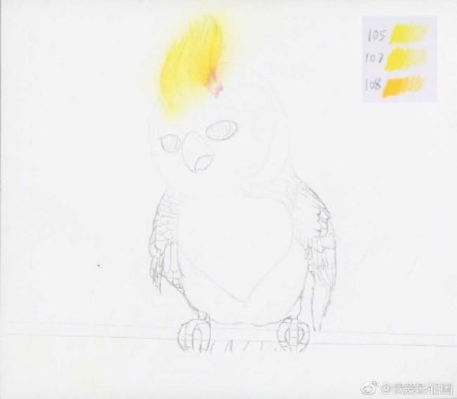 楚乔传 苍梧鸟彩铅手绘教程图片 楚乔传里那只可爱的苍梧鸟 鹦鹉怎么画_www.youyix.com