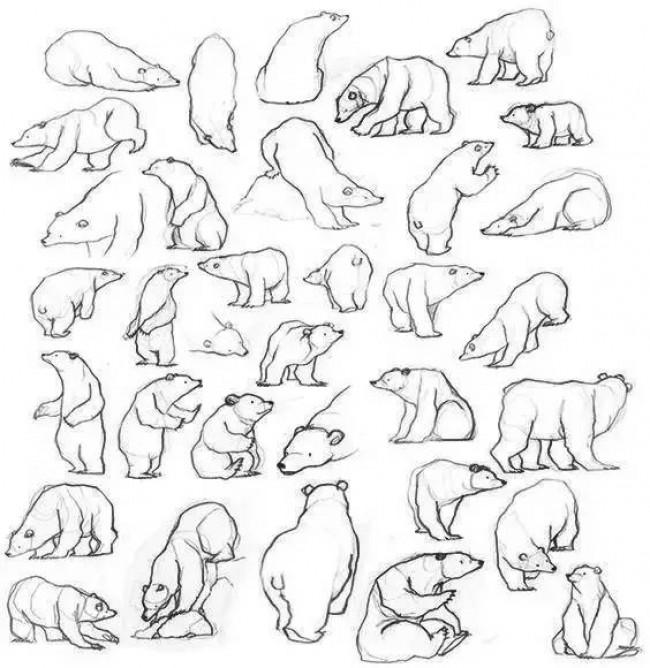 注意!一大批动物绘画手稿来袭,快收藏吧。_www.youyix.com