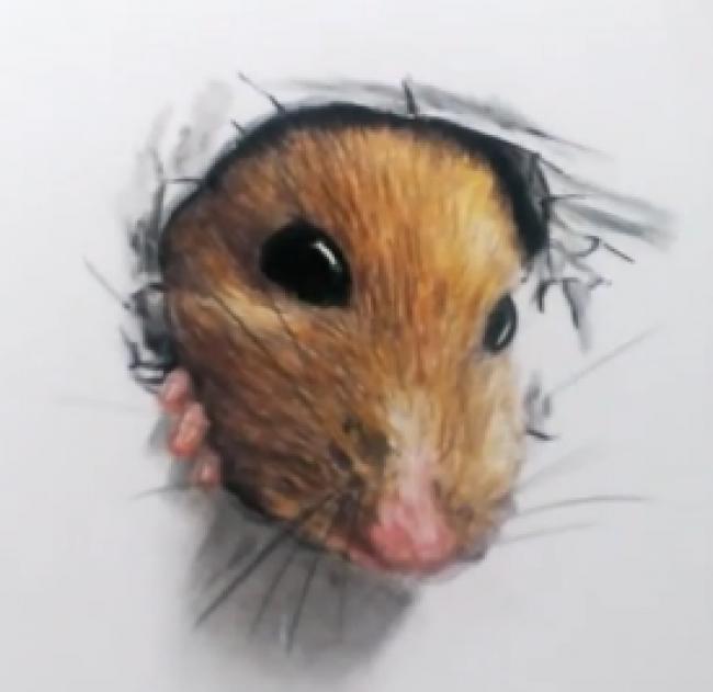 可爱小老鼠彩铅画 这个小老鼠突然破纸而出的教程_www.youyix.com