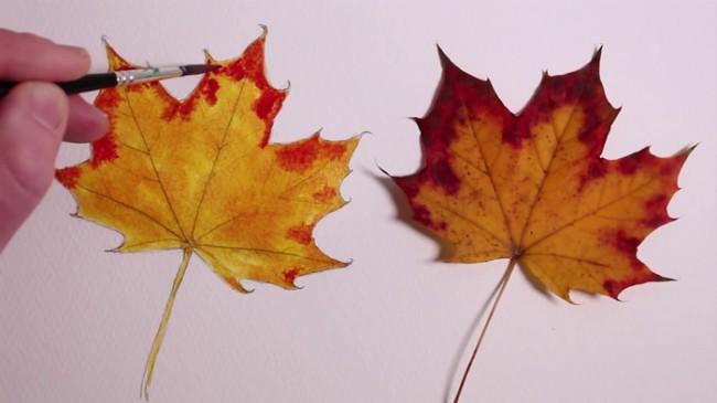 【视频】超写实枫叶水彩手绘视频教程 真实感的枫叶水彩怎么画 枫叶画法_www.youyix.com