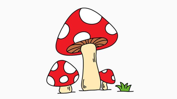 有一首儿歌教采蘑菇的小女孩小朋友们都有听过吗?有一种小植物十分的可爱,造型像一个小伞一样,有些还可以吃。小朋友们经常都会吃到的。它就是小蘑菇。不过小朋友知道吗?越是颜色鲜艳的蘑菇就越危险,很可能有毒不能吃的哦。色彩鲜艳是告诉想吃掉它的动物,说我是有毒的哦,我很危险,你们不要吃我。 小蘑菇也是很容易画的,首先我们画一个圆角的三角形,注意有一定的角度,不要完全的正的哦。因为自然界的植物是很自然的。注意下面不要封闭起来,留下一个缺口来画蘑菇的茎干。 因为我们要画一个立体的蘑菇,所以我, 画出透视下面的区域。再