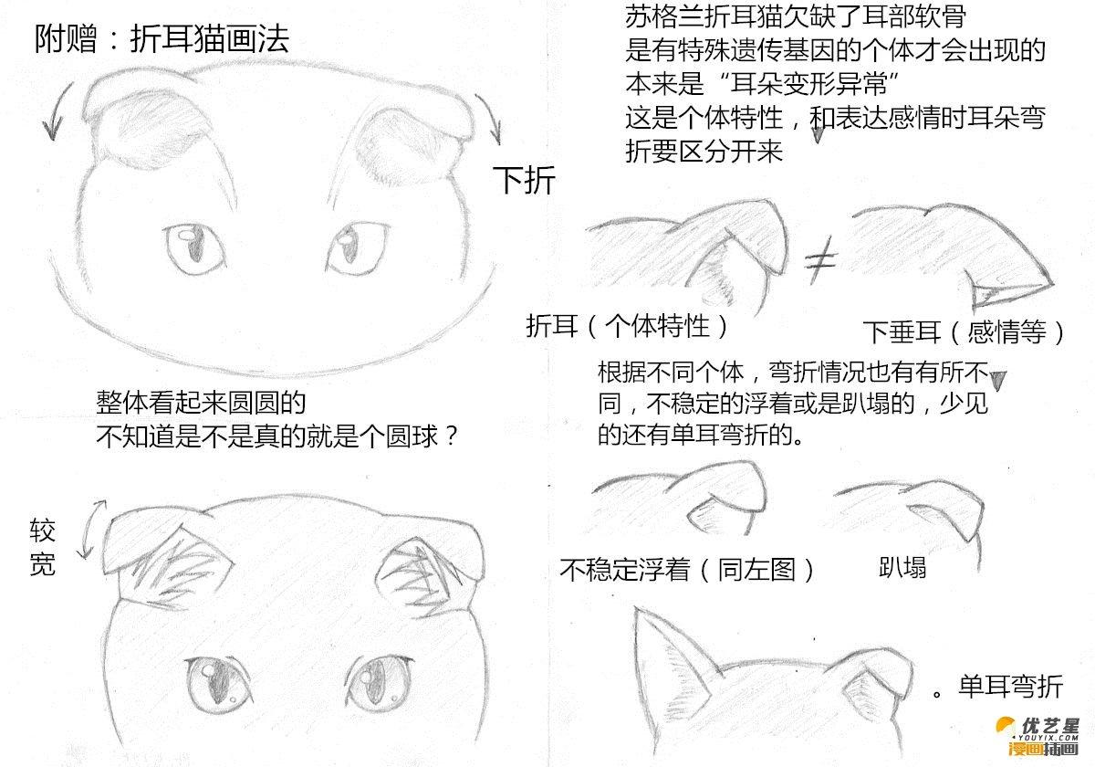 猫的头部绘画教程 画猫的头部五官步骤教程 猫的头部漫画绘画素材教程