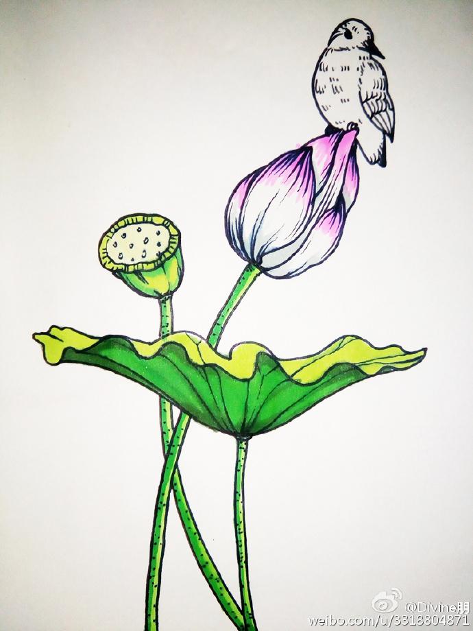 美丽的池塘一角简笔画 莲叶荷花莲蓬小鸟唯美简笔画水彩上色教程图片
