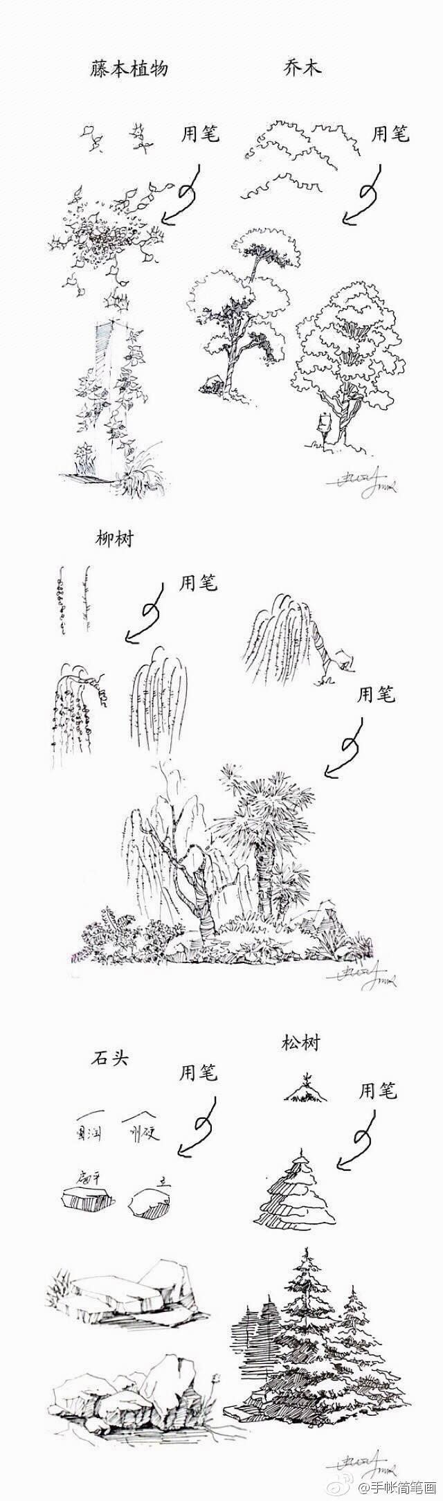 常见植物的线稿简笔画素材 带植物名称 可以作为景观设计线描手法素材